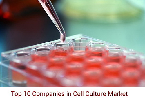 cell tissue engineering stem cell culture and plant cells and animal cell culture